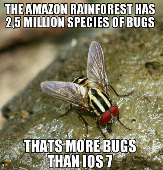 That's a lot of bugs…