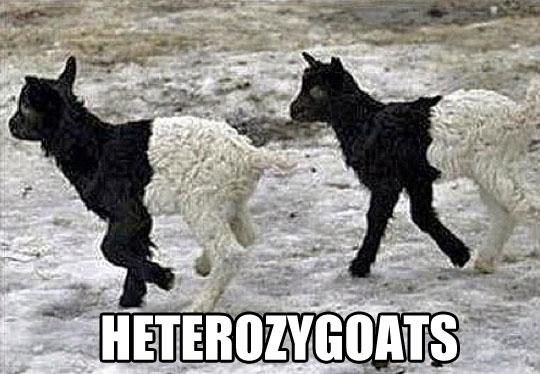 Biologists will understand…