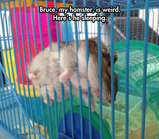 funny hamster pictures for kids - photo #35