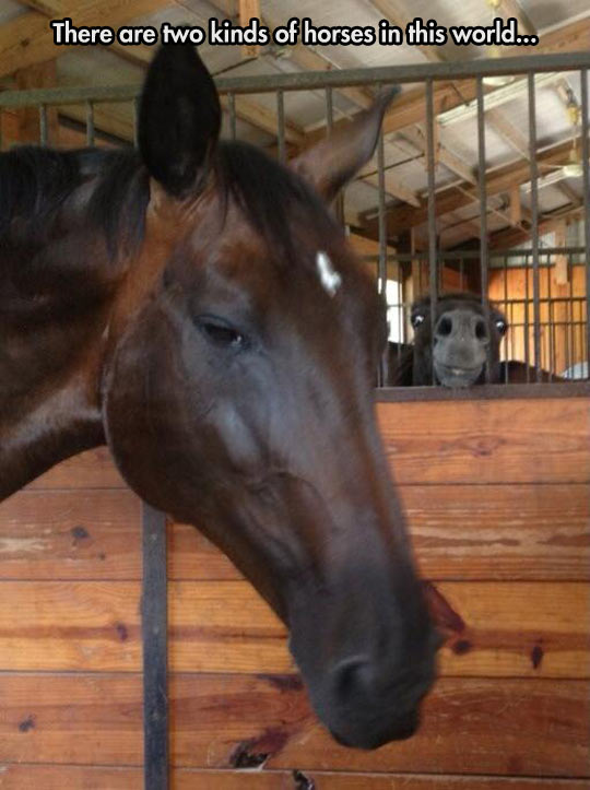 funny-horses-sad-long-face-smiling