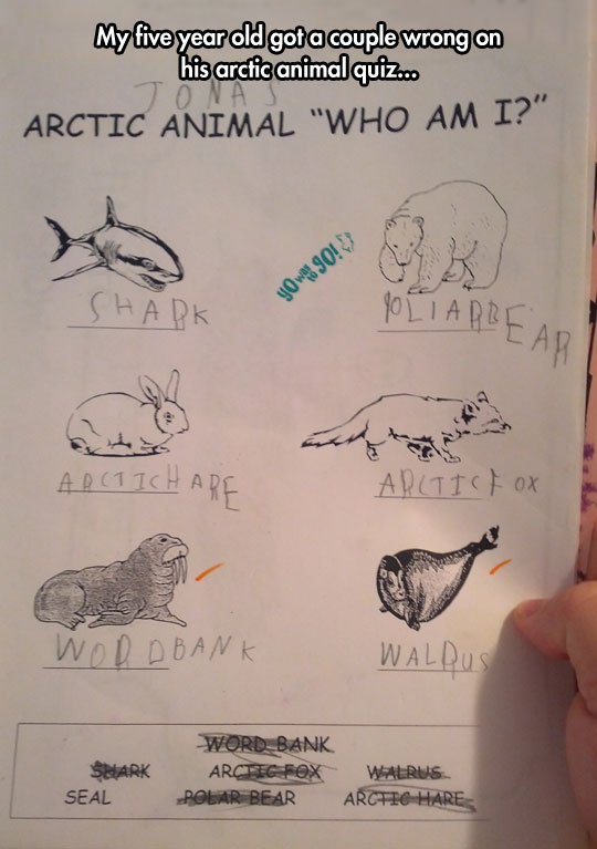 Arctic animals…