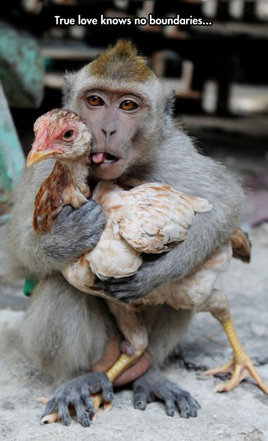funny-monkey-hugging-chicken