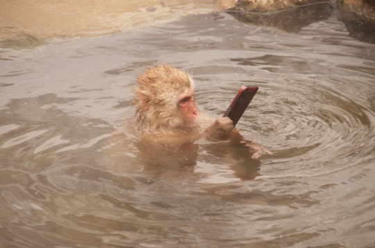 A monkey relaxing with its phone in the bathroom…