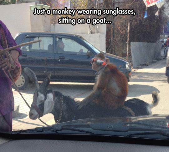 funny-monkey-wearing-sunglasses-riding-monkey