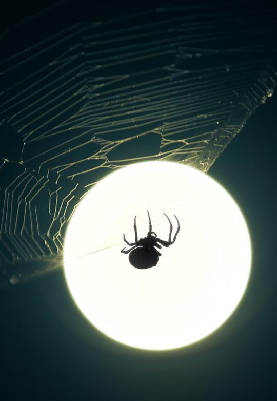 Full moon spider silhouette…