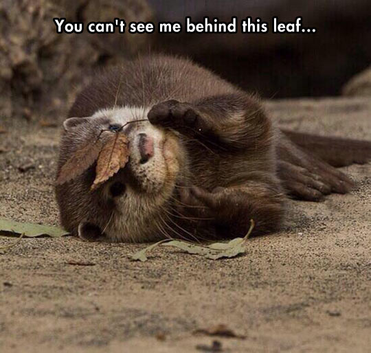 It must be in an otter place…