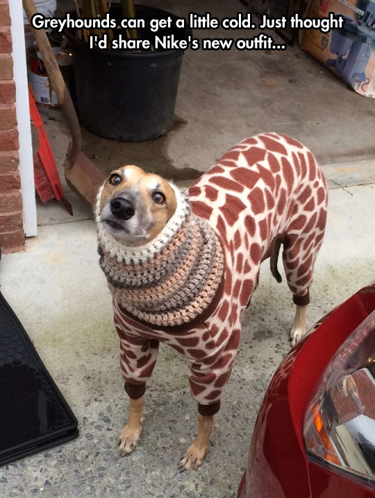 funny-outfit-dog-large-neck