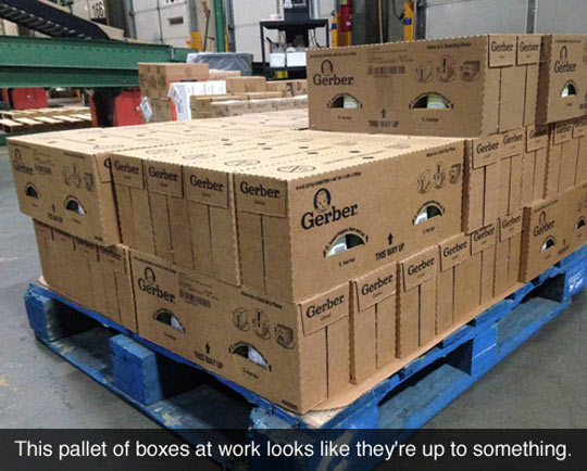 funny-pallet-boxes-eyes-suspicious