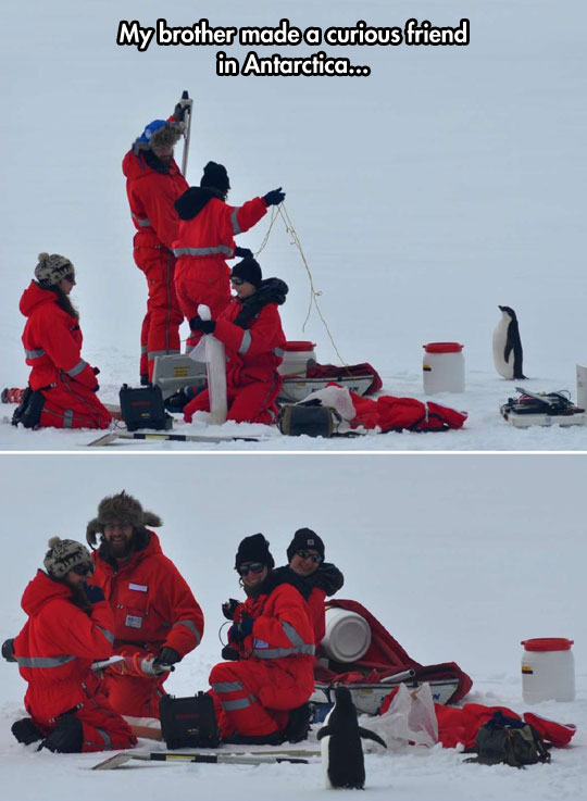 funny-penguin-expedition-explorers-equipment