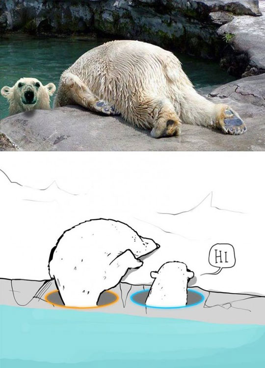 Polar Portal…