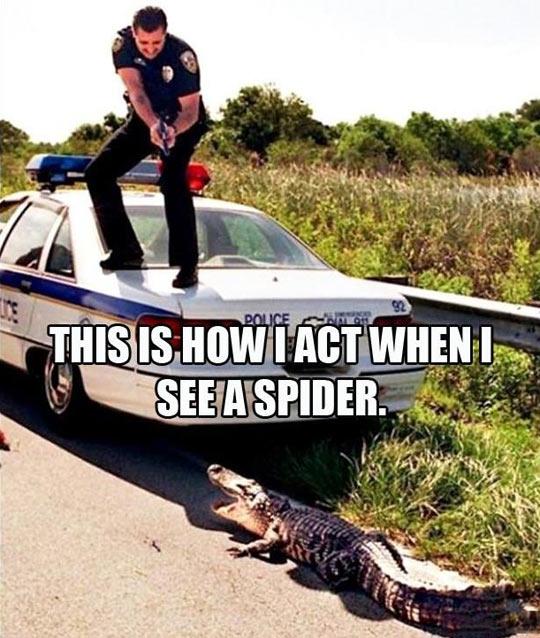 funny-police-car-crocodile-scared-fire