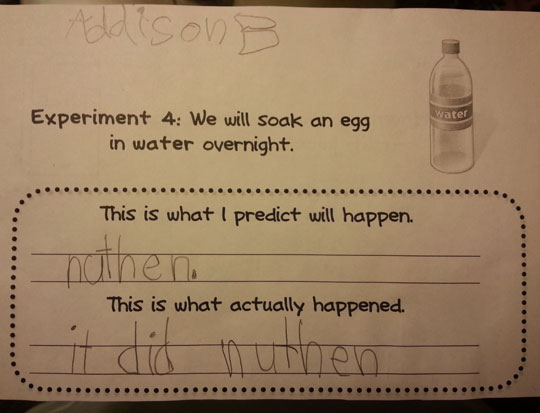 funny-question-experiment-egg-water