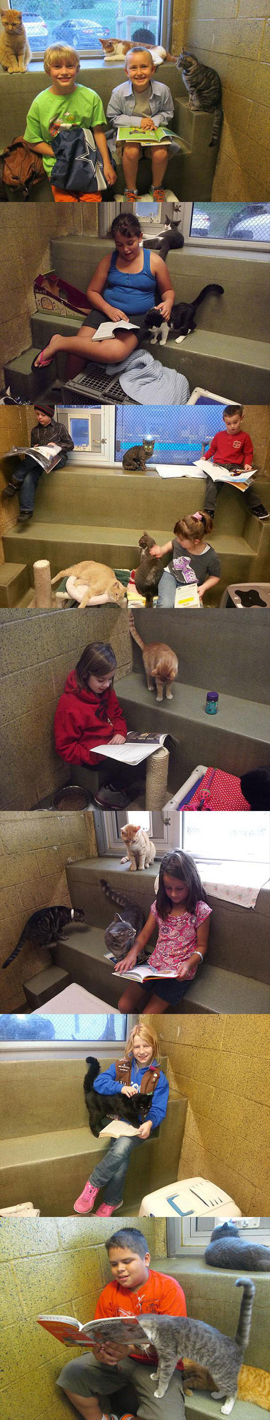funny-reading-children-shelter-cats-book-buddies-kids