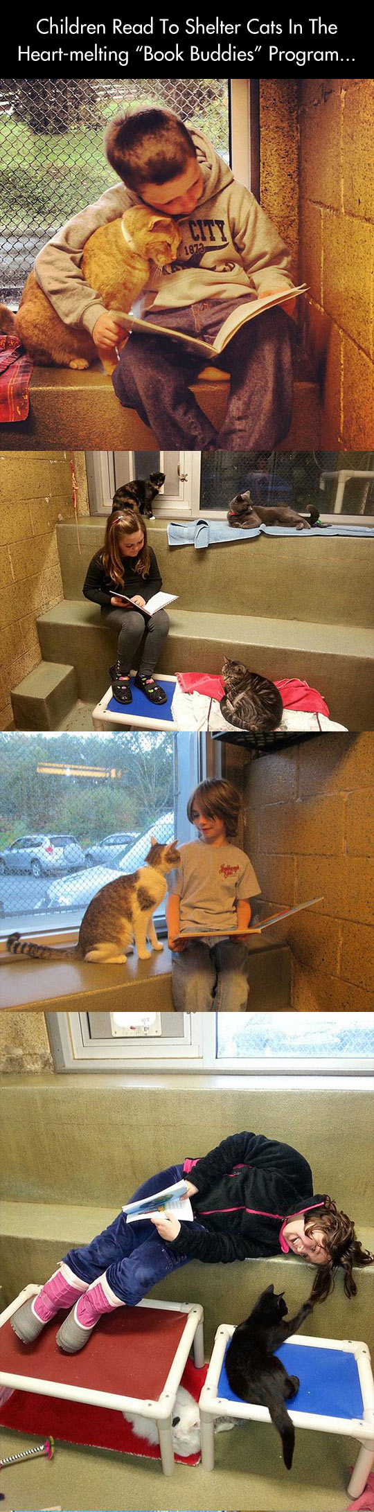 Children read to shelter cats...
