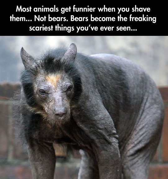 I thought they were scary when they were fuzzy…