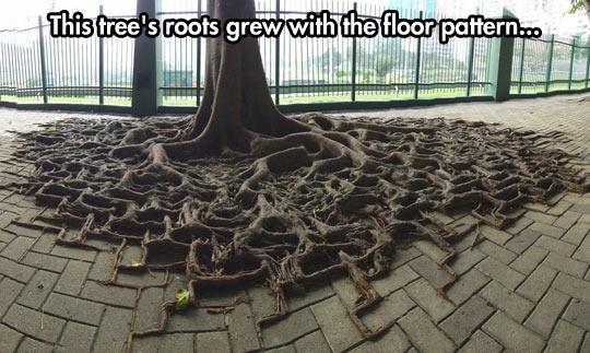 Square roots…