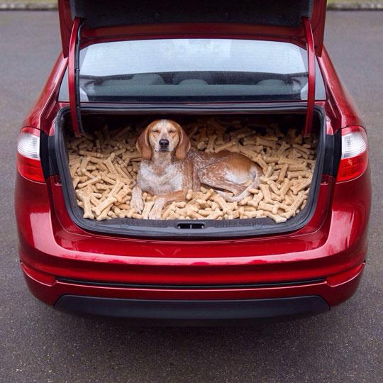 funny-trunk-car-dog-bones-smile-happy