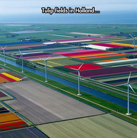 The most Dutch picture you'll see today…