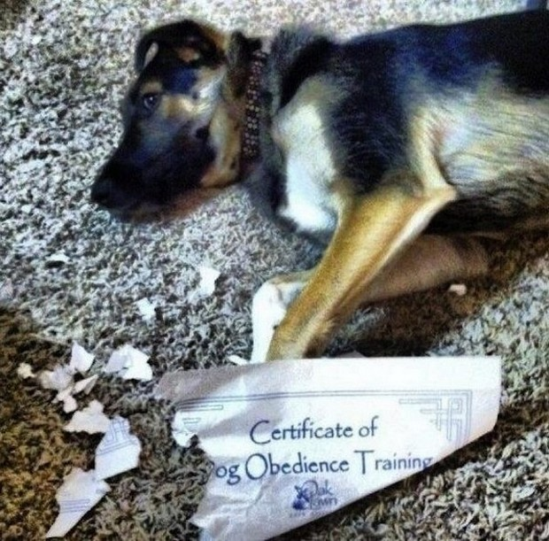 Animals-being-jerks-Dog-Obedience-training
