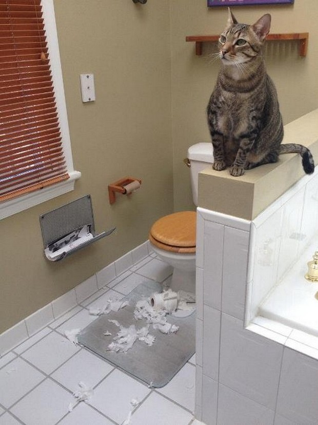 Animals-being-jerks-cat-shred-toilet-paper