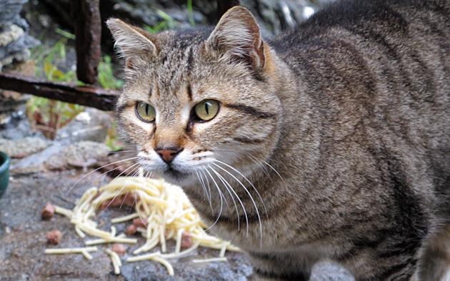 CT-Cat