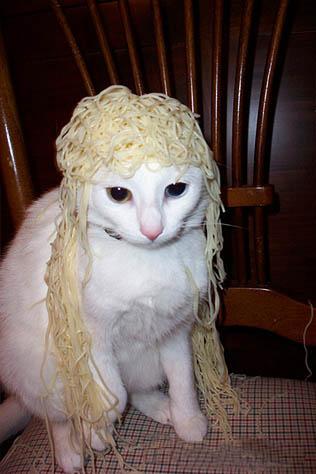 Cat-with-Spaghetti-Hair