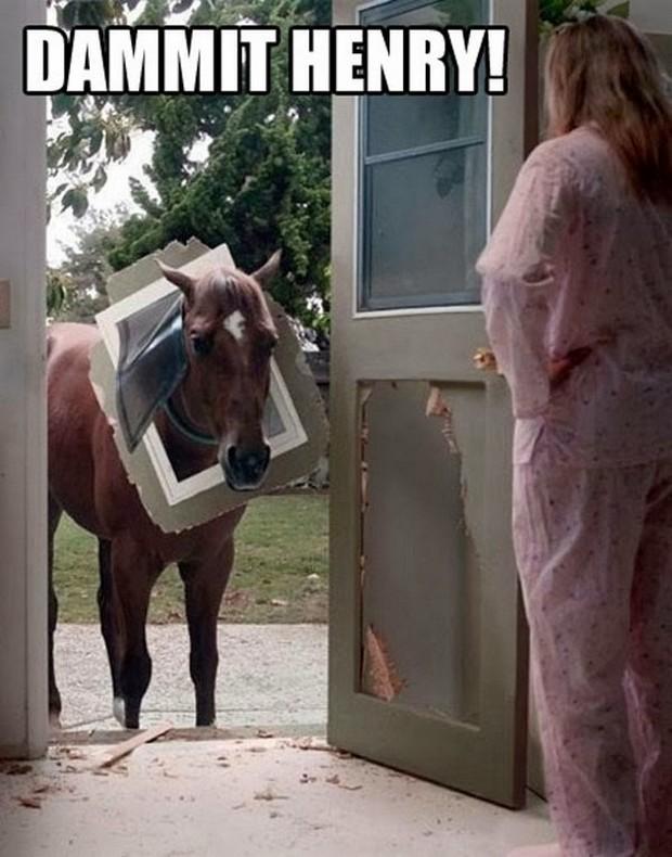 Horse-through-cat-door