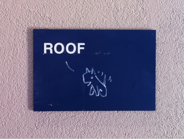 Smartass-Responses-Roof-Access-Dog-grafitti