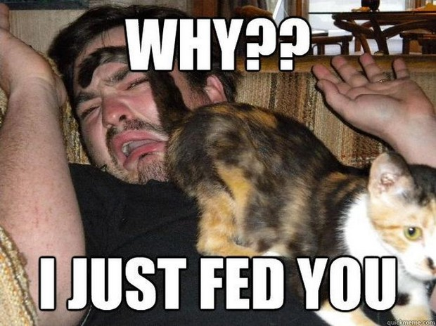 Why-I-just-fed-you-Cat