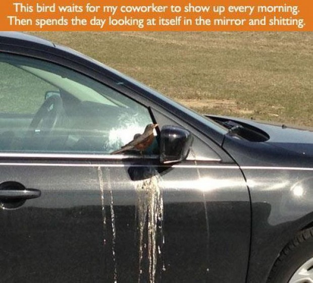 bad-behavior-bord-poop-on-car