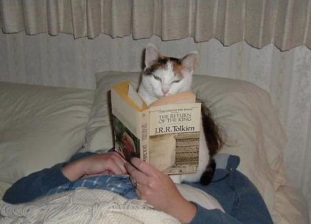 bad-behavior-cat-in-face