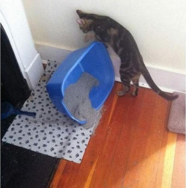 bad-behavior_cat-tipping-litterboxf