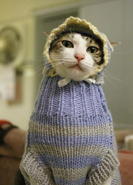 cat-dressed-as-baby-1