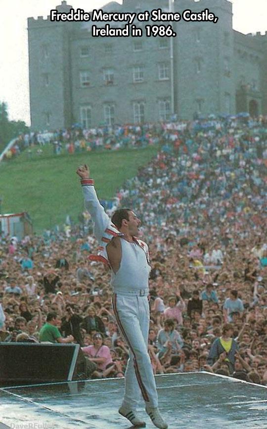 The Great Freddie…