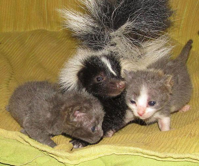 cool-animal-shelter-friendship-Rocky-Ridge-cat-skunk