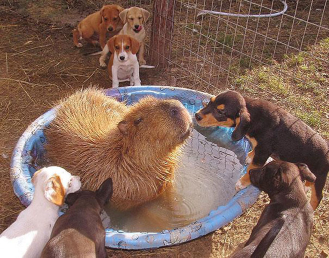 cool-animal-shelter-friendship-Rocky-Ridge-dog-water-bowl