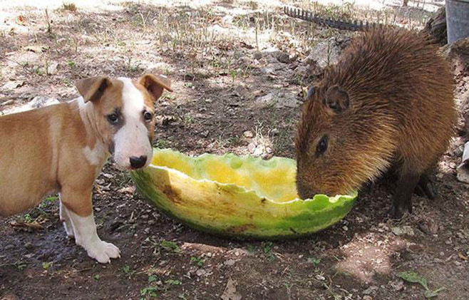 cool-animal-shelter-friendship-Rocky-Ridge-dog-watermelon