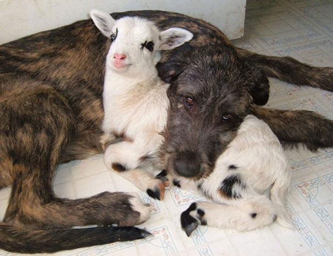 cool-animal-shelter-friendship-Rocky-Ridge-love-goat
