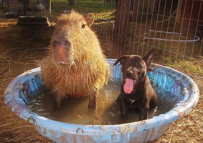 cool-animal-shelter-friendship-Rocky-Ridge-pool