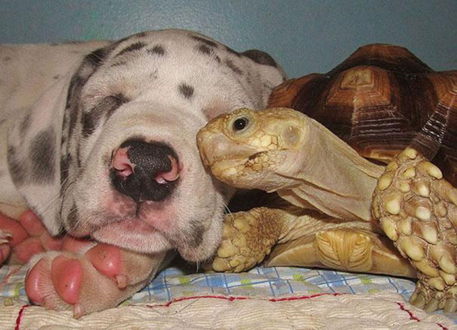 cool-animal-shelter-friendship-Rocky-Ridge-turtle-dog