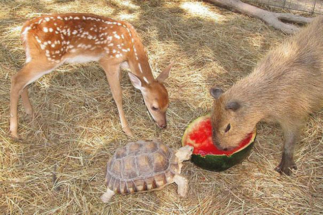 cool-animal-shelter-friendship-Rocky-Ridge-turtle-eating