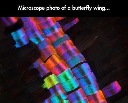 This Is How Complex a Seemingly Simple Butterfly Wing Is