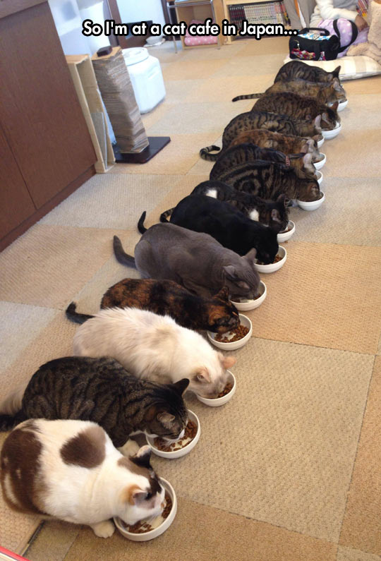 cool-cat-cafe-Japan-eating
