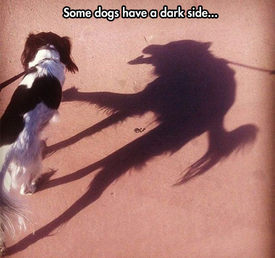 cool-dog-shadow-monster-looking-shape