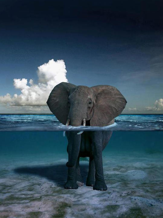 Elephant In The Water