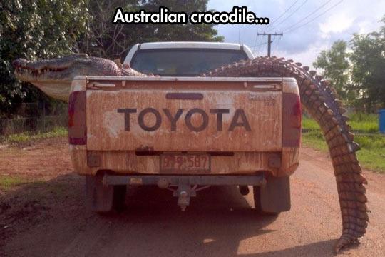 cool-giant-crocodile-back-truck-Australian