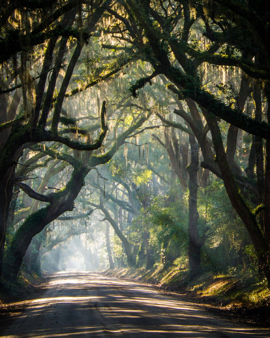 cool-road-forest-South-Carolina-trees