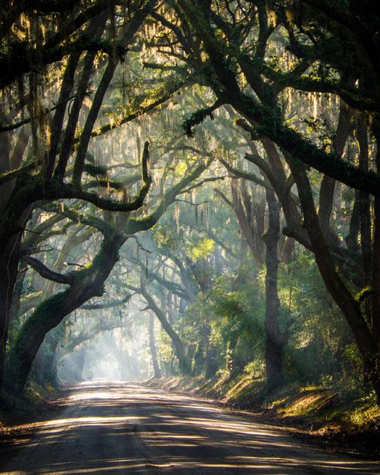 The Rural Roads Of South Carolina