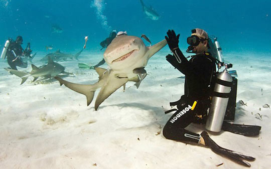 Shark High Finning a Diver