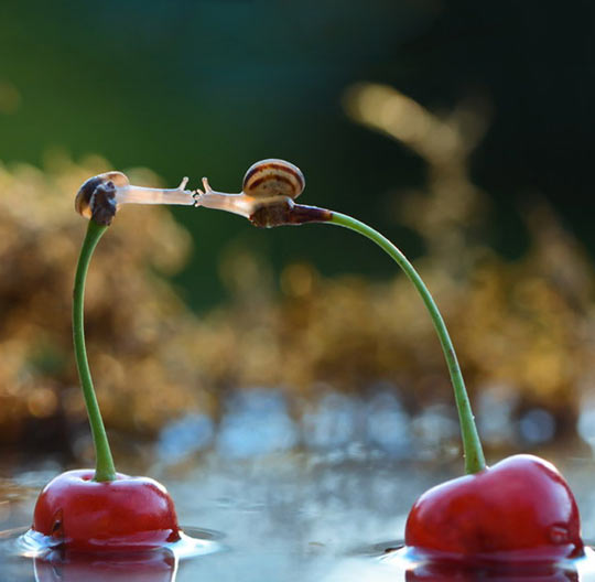 cool-snails-kiss-cherry-water